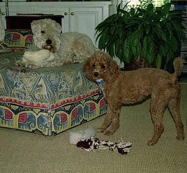 Binkley and  Ginger by Samuel M Purvis III