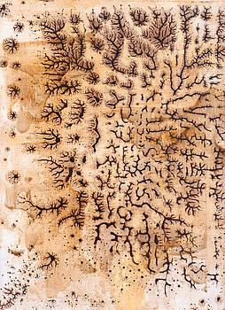 Birch 1 by Douglas Lail