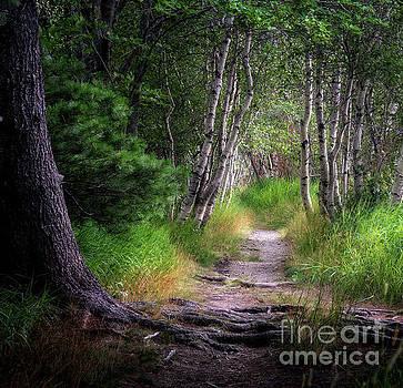 Birch And Pine by Scott Thorp