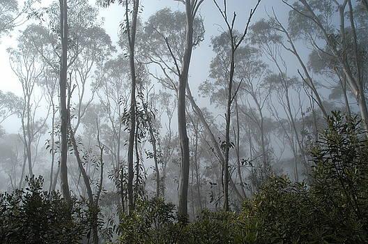Birch at Altitude by Darren Kearney