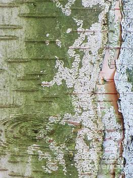 Birch Bark by Adrian March