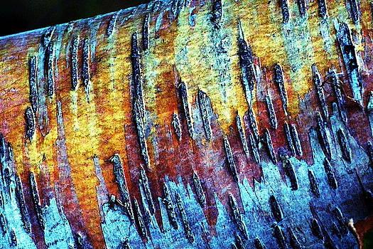 Birch Bark  by Nicki Bennett