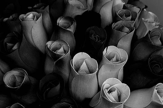 Birch Bark Roses 1 by Cindy Nunn