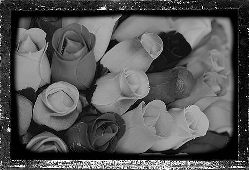 Birch Bark Roses 20 by Cindy Nunn
