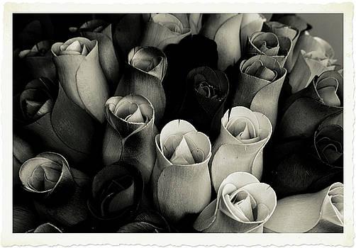 Birch Bark Roses 4 by Cindy Nunn