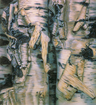 Birch Bark by Wayne Pruse