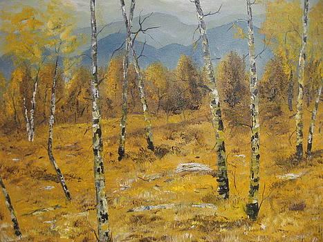 Birch Field by Brian Hustead