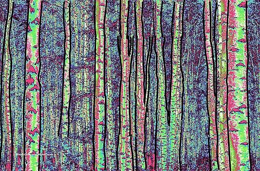 Birch Forest by Michael Chatman