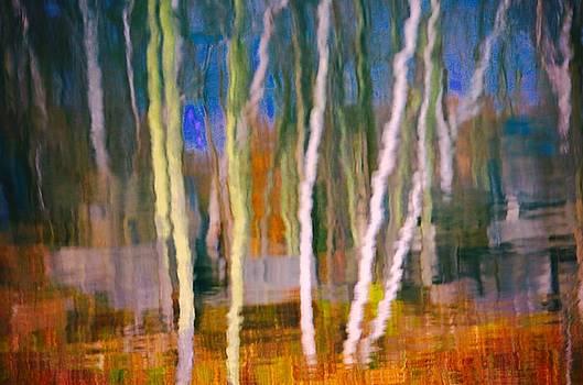 Birch Forrest  by Gillis Cone