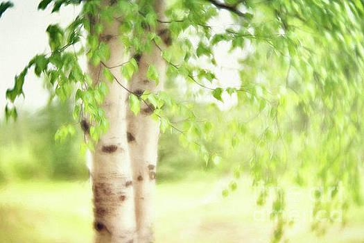 Birch in Spring by Priska Wettstein
