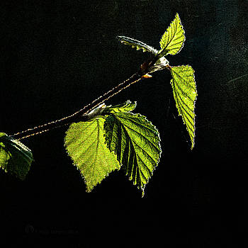 Birch Leaf by Fred Denner