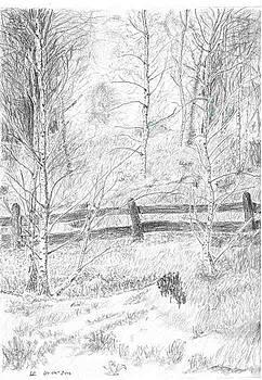 Birch by Sal Lomick