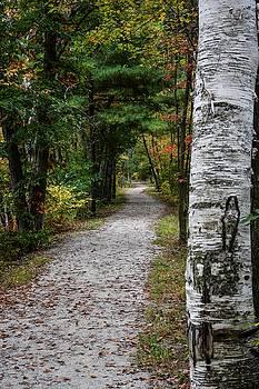 Birch Trail by Cowboy Visions