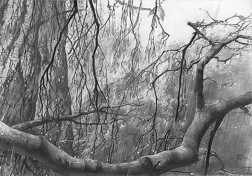 Birch Tree in Rain by Denis Chernov