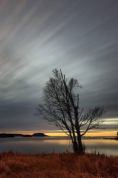Birch Tree by Jakub Sisak