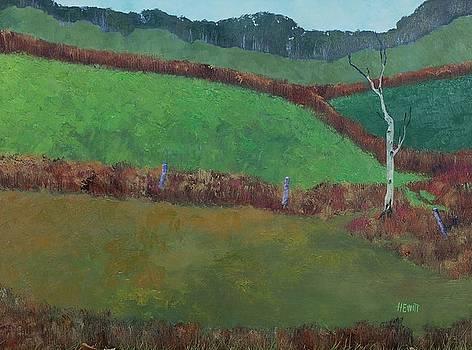 Birch Tree by Philip Hewitt