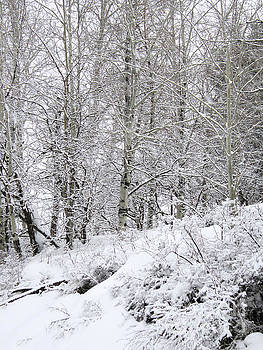 Birch trees in Snow by Katrina Perekrestenko