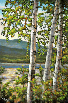 Birch Trees in the Sun by Eileen  Fong