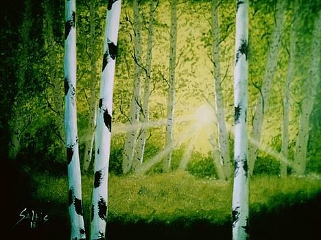 Birch Trees by Jim Saltis