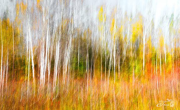 Birch Trees Northern Michigan by J Thomas