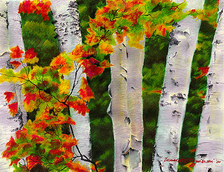 Birches I Autumn Showers by Bernadette Kazmarski