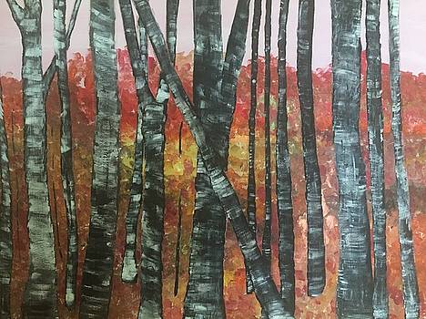 Birches in the Fall by Paula Brown