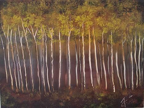Birches by Juan Carlos Feliciano