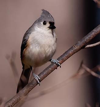 Buddy Scott - bird 1