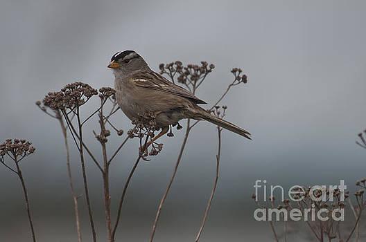 Rod Wiens - Bird Alert