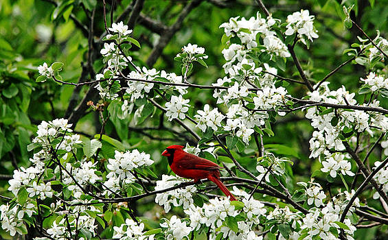 Debbie Oppermann - Bird And Blossoms