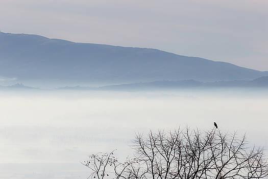 Bird and fog by Massimo Discepoli