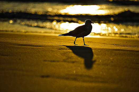 Bird At Sunrise by Marc Evans