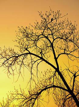 James Steele - Bird at Sunset