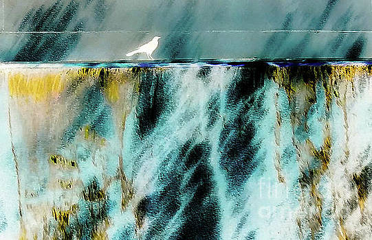 Bird At The Abstract Fountain by D Davila