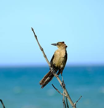 Bird at the Beach by Charles Van Riper