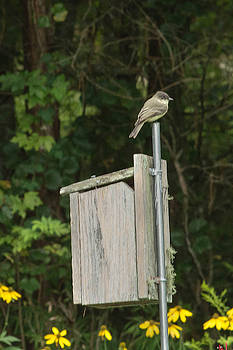 Bird Atop Pole of Nesting Box by Linda Geiger