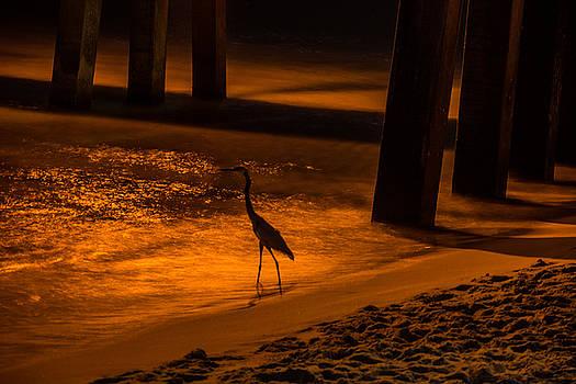 Bird Awaiting by Jon Cody