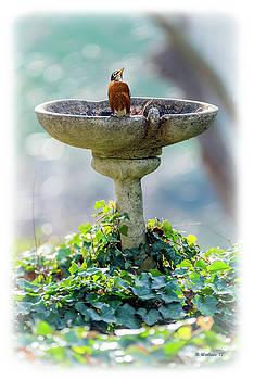 Bird Bath by Brian Wallace