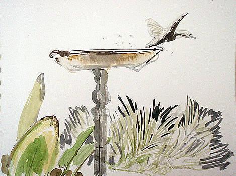 Bird bath by Vaughan Davies