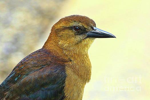 Bird Beauty by Deborah Benoit