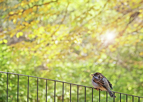 Bird, Central Park, New York City by Brooke T Ryan
