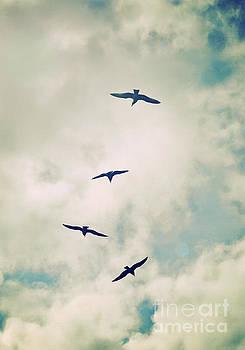 Bird Dance by Lyn Randle