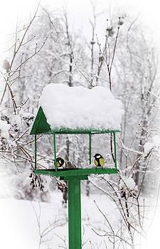 bird feeders by Iuliia Malivanchuk by Iuliia Malivanchuk