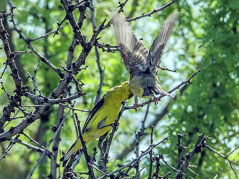 Tam Ryan - Bird Feeding