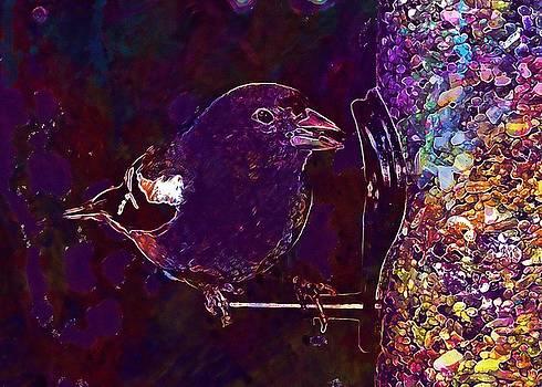 Bird Finch Wildlife Nature  by PixBreak Art