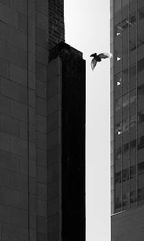 Bird flight downtown by Roy Inman