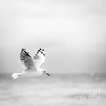 Tim Hester - Bird Flying Over Ocean Black and White