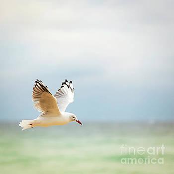 Tim Hester - Bird Flying Over Ocean
