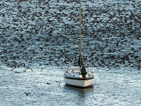 Bird Frenzy by the Sea by Jan Moore