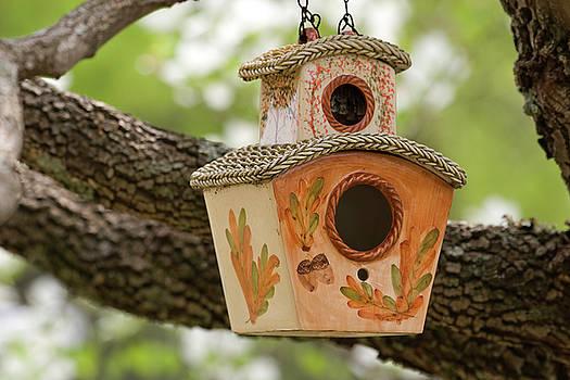 Jill Lang - Bird House